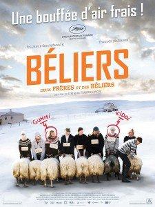 Béliers1